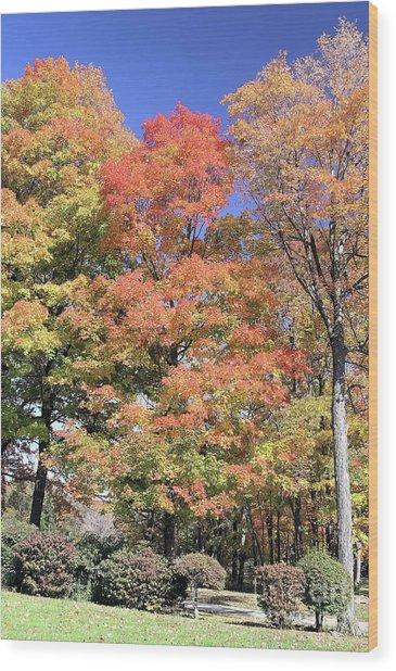 Upj Campus Autumn  Wood Print