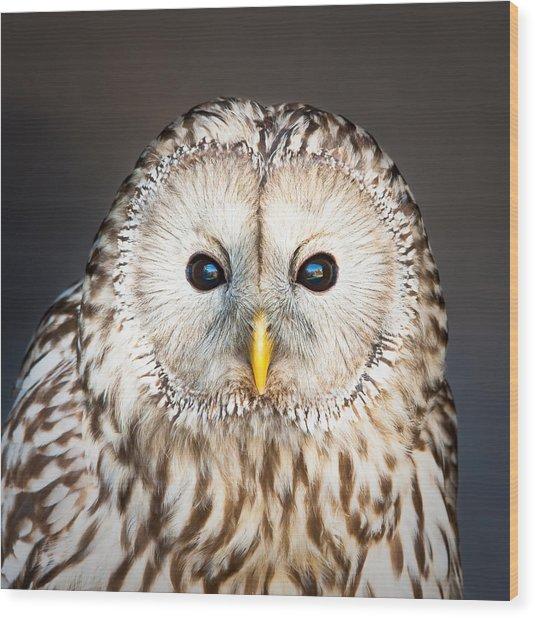 Ural Owl Wood Print