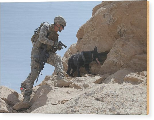 Us Soldier And Blek A Working Dog Clear Wood Print by Everett