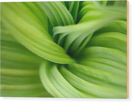 Veratrum Macro Wood Print
