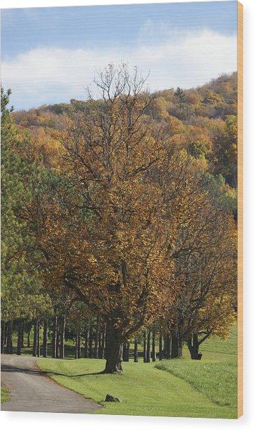 Vermont Path Wood Print by Margaret Steinmeyer