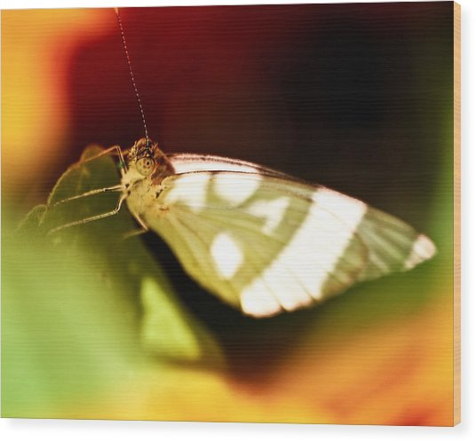 Vibrant Butterfly Wood Print