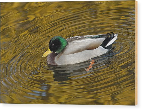 Vibrating Mallard Wood Print by Howard Knauer