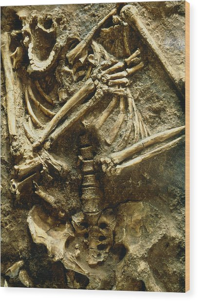 View Of The Skeleton Of A Neanderthal Wood Print by Volker Stegernordstar - 4 Million Years Of Man