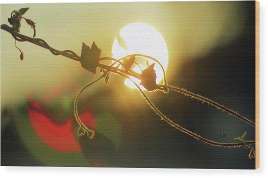 Vine Light Wood Print