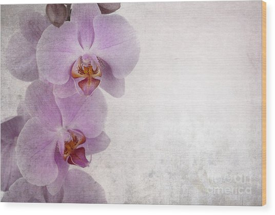 Vintage Orchids Wood Print by Jane Rix