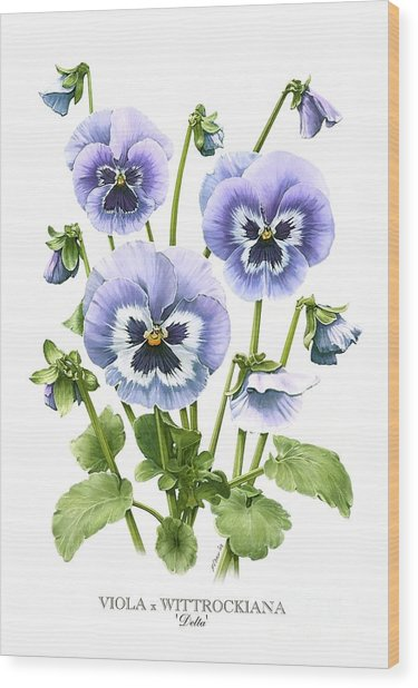 Viola Pansies Wood Print
