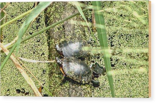 Virginia Swamp Turtles Wood Print
