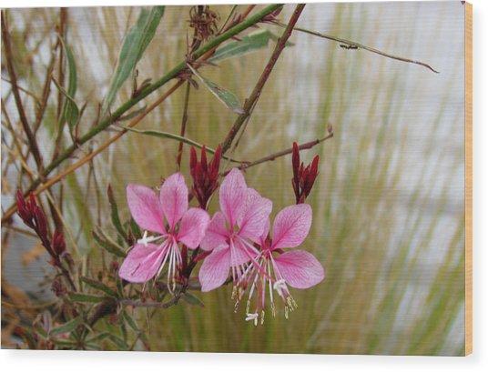 Visiting The Pink Guara Wood Print
