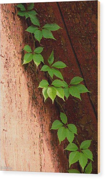Vitis Wood Print