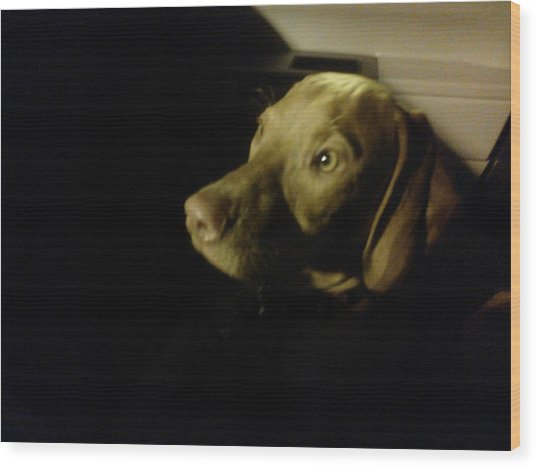 Vizsla In The Shadows Wood Print by Brittany Roth
