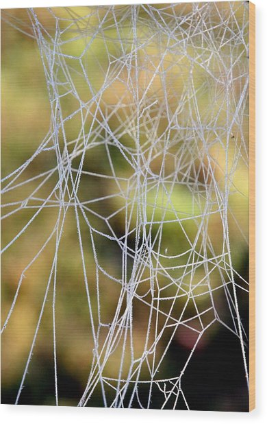 Wacky Winter Web Wood Print