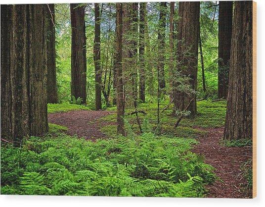 Walking Inward Wood Print