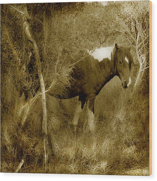 Wandering Wood Print