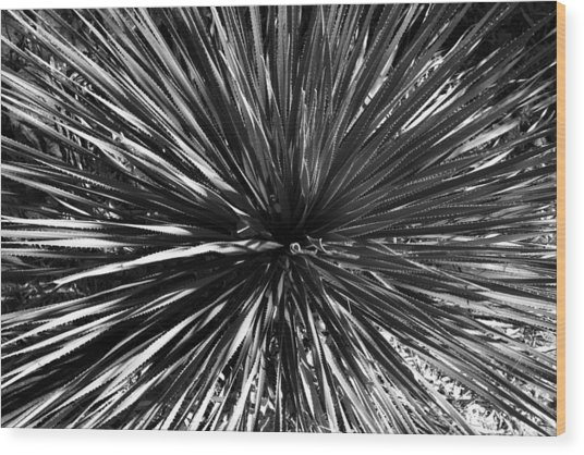 Warp Speed  Wood Print
