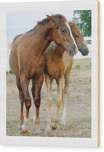 Wary Young Horses Wood Print