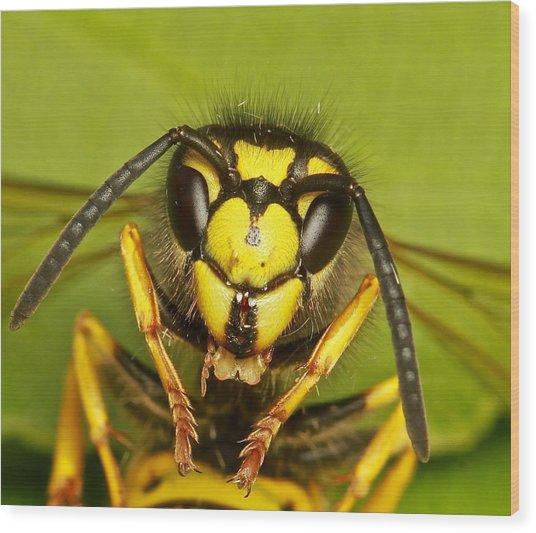 Wasp - Portrait Wood Print by Ronald Monong