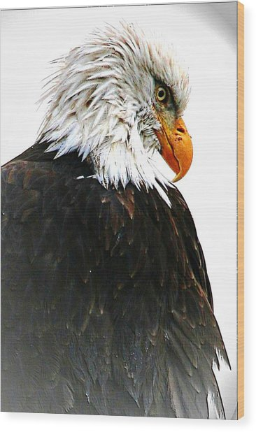 Watching Over You Wood Print by Carrie OBrien Sibley