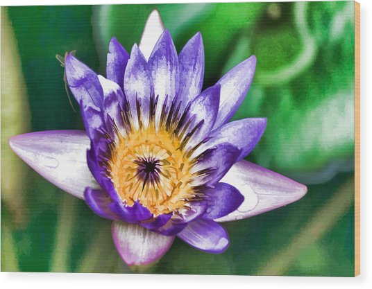 Water Color Lily Wood Print