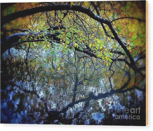 Water Cove Wood Print by Maria Scarfone