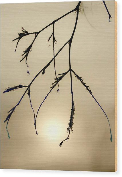 Water Droplets Wood Print by Jim Painter