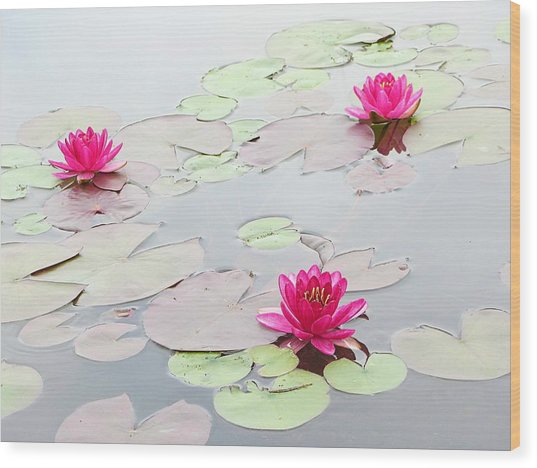Water Lilies In The Morning Wood Print by Michael Taggart