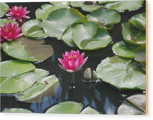 Wood Print featuring the photograph Water Lilies by Jennifer Ancker