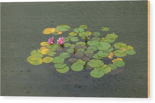 Water Lilly In Rain -1 Wood Print by Muhammad Hammad Khan