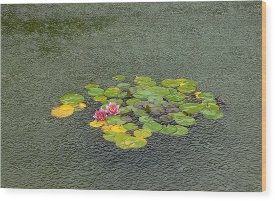 Water Lilly In Rain -2 Wood Print by Muhammad Hammad Khan