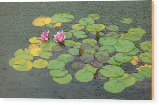 Water Lilly In Rain -3 Wood Print by Muhammad Hammad Khan