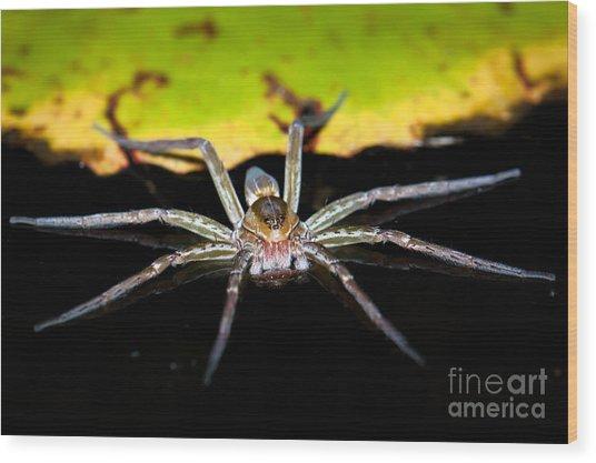 Water Spider Wood Print by Johan Larson
