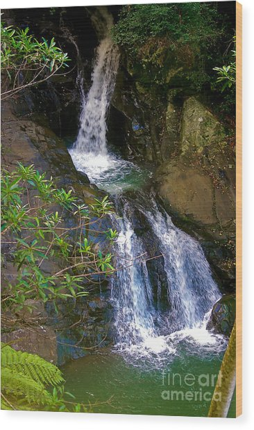Waterfall In The Currumbin Valley Wood Print