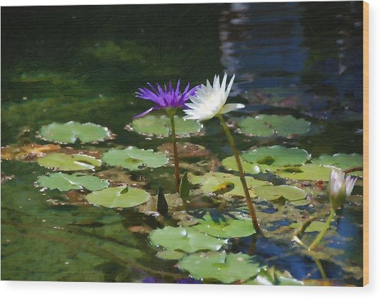 Waterlilies 1 Wood Print