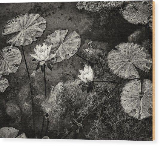 Waterlilies In Sepia Wood Print