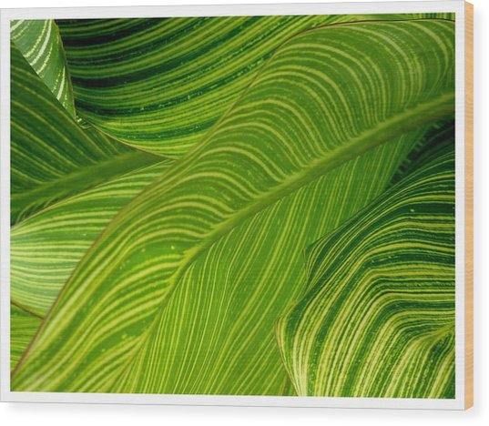 Waves Of Green And Yellow Wood Print