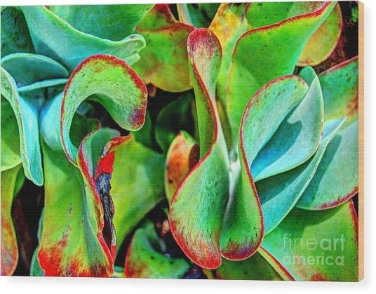 Waves Vegetable 3 Wood Print by Elena Mussi