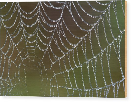 Web With Dew Wood Print