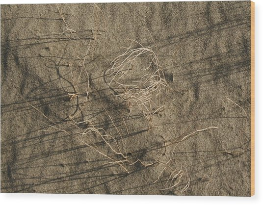 Weeds In Sand Wood Print