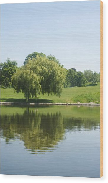 Weeping Willow Tree.  Wood Print