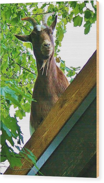 What Are You Looking At Wood Print