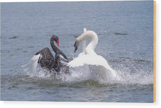 When Swans Attack Wood Print by Carrie Munoz