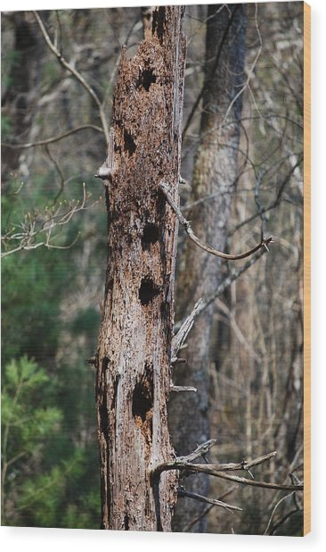 When Woodpeckers Attack Wood Print by Carrie Munoz