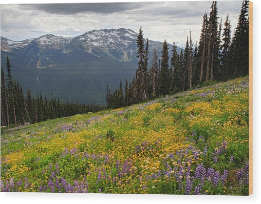 Whistler Blackcomb Wild Flowers In Bloom Wood Print by Pierre Leclerc Photography