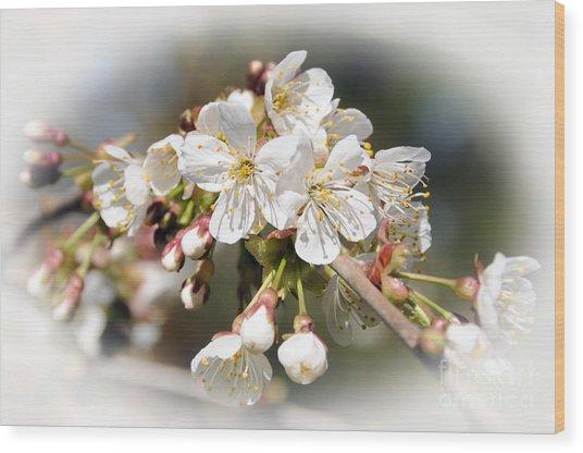 White Apple Blossoms Wood Print