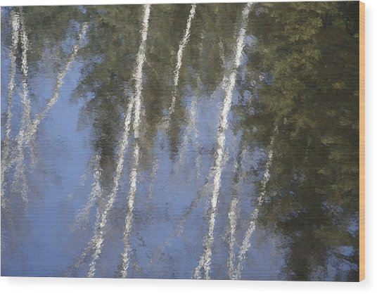 White Birch Trees Wood Print by Carolyn Reinhart