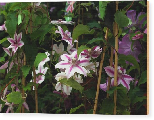White Clematis Wood Print