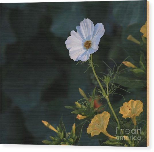 White Cosmos And Four O'clock Floral Wood Print by Marjorie Imbeau