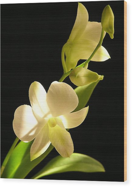 White Dendrobium Wood Print by Andrea Drake