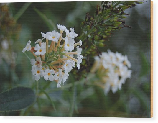 White Flower Wood Print by Beverly Hammond