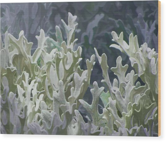 White Forest 7 Wood Print by Michael Taggart II